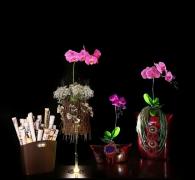 Rangkaian Bunga Eden (4)
