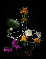 Rangkaian Bunga Eden (7)